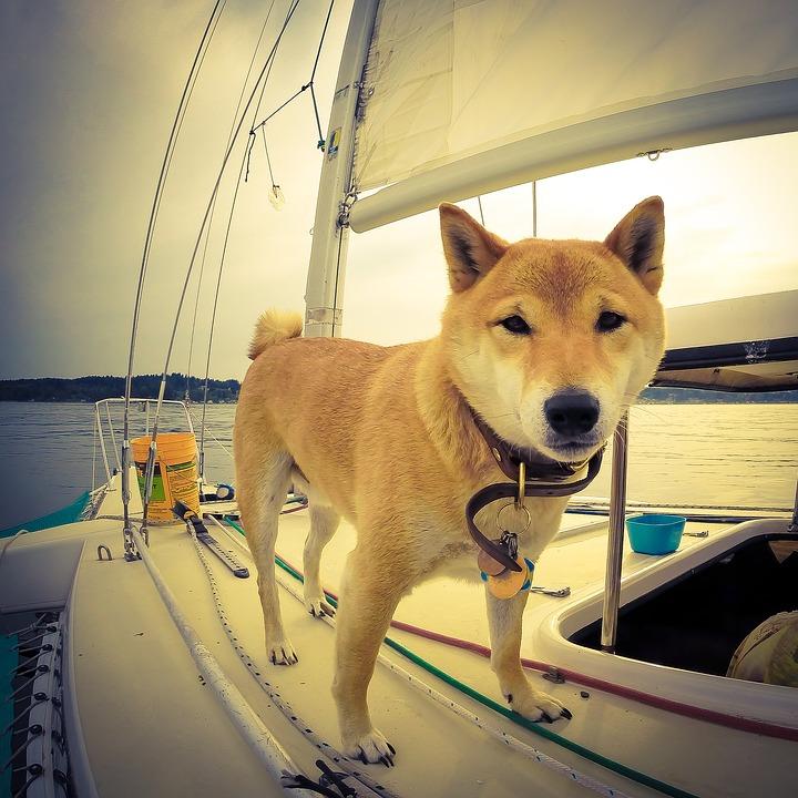 chien et propret sur le bateau permis bateau rennes dinard saint malo 02 30 96 36 65 bateau. Black Bedroom Furniture Sets. Home Design Ideas